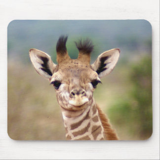 Baby giraffe picture, Kenya, Africa | Mouse Pad