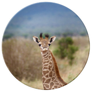 Baby giraffe picture, Kenya, Africa | Porcelain Plate