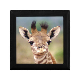 Baby giraffe picture, Kenya, Africa | Small Small Square Gift Box