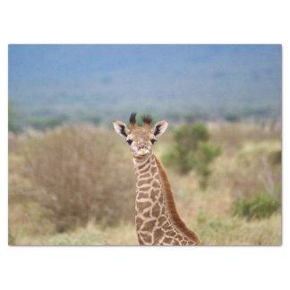 Baby giraffe picture, Kenya, Africa | Tissue Paper