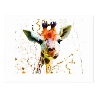 Baby Giraffe Postcard