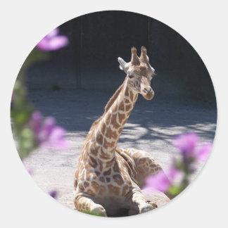 baby giraffe round stickers