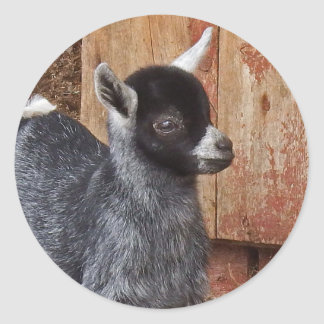 Baby Goat By The Barn Classic Round Sticker