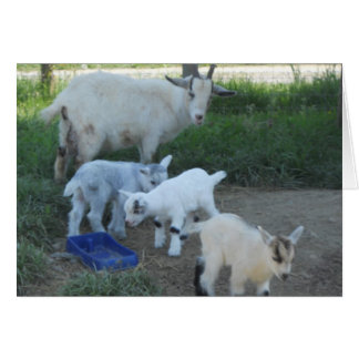 Baby Goat Family Card