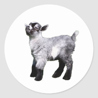 baby goat left side classic round sticker