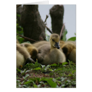Baby Goose Card