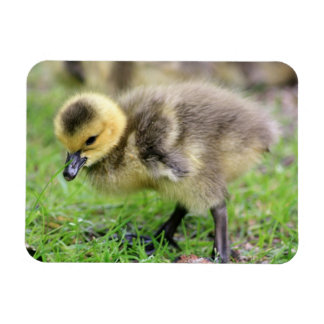 Baby Goose Magnet