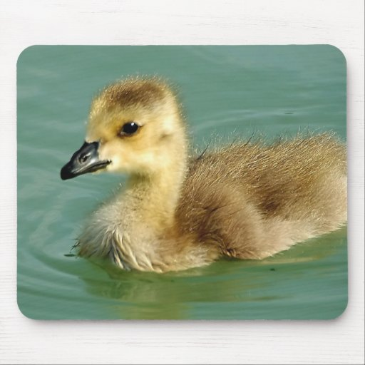 Baby Goose Mouse Pads