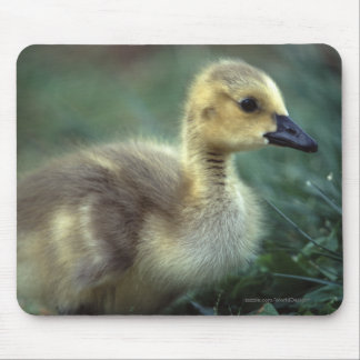 Baby Goose Mousepads