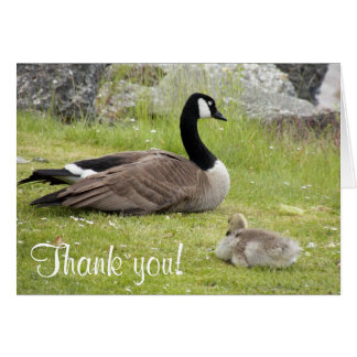 Baby Goose Photo Thank You Note Card