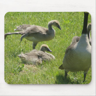 Baby goose stretch mouse pad