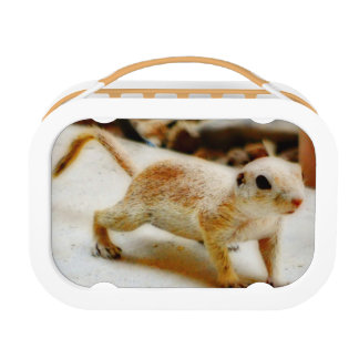 Baby Ground Squirrel in Orion Lunch Box