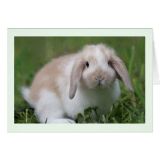 Baby Holland Lop Rabbit Card