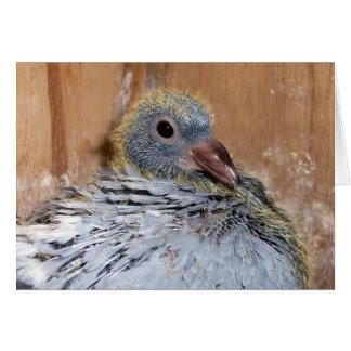 Baby Homing Pigeon Notecard
