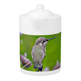 Baby Hummer in Turquoise Tea Pot