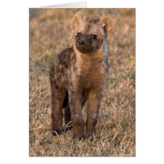 Baby Hyena Cards