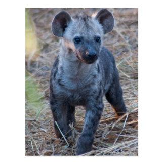 Baby Hyena Postcard