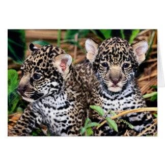 Baby Jaguar Cubs Card