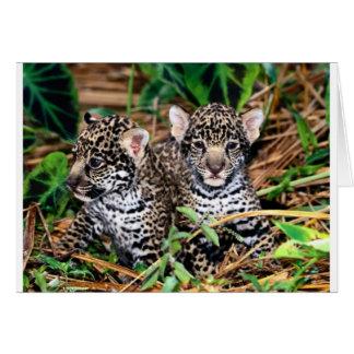 Baby jaguars card