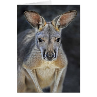 Baby Joey Red Kangaroo Close-Up Greeting Card