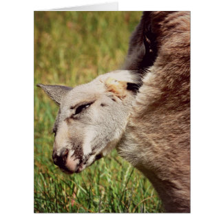 baby kangaroo card