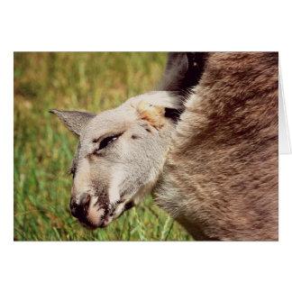 Baby Kangaroo Greeting Cards