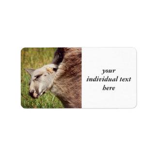 baby kangaroo address label