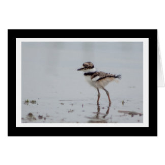 Baby Killdeer Blank Greeting Card