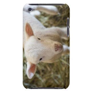 Baby Lamb iPod Case-Mate Case