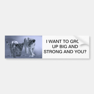 Baby lion cubs at play bumper sticker
