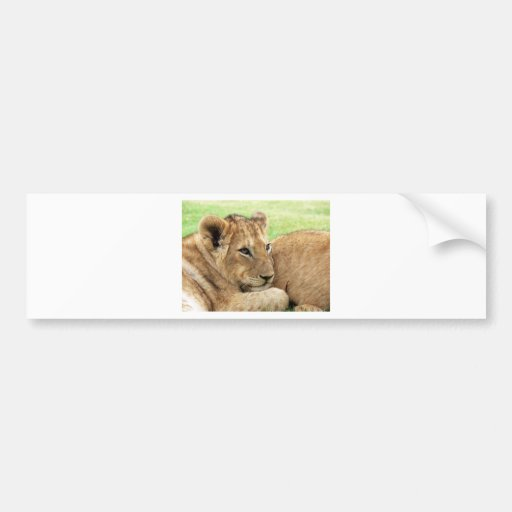 Baby Lion Young Wild Animal Bumper Sticker