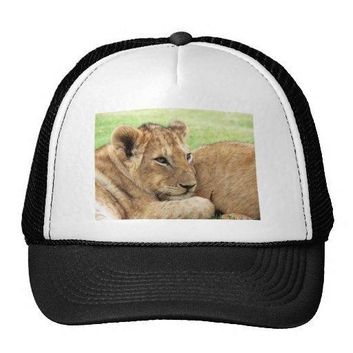 Baby Lion Young Wild Animal Mesh Hats