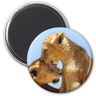 Baby lions love fridge magnets