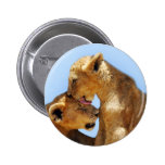 Baby lions love pin