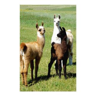 Baby Llama huddle Customized Stationery
