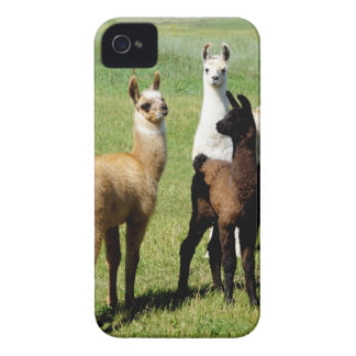 Baby Llama huddle iPhone 4 Case-Mate Case