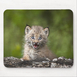 Baby Lynx  Looking Over A Fallen Tree Mouse Pad