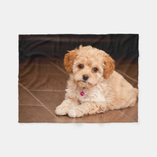 Baby Maltese poodle mix or maltipoo puppy dog Fleece Blanket