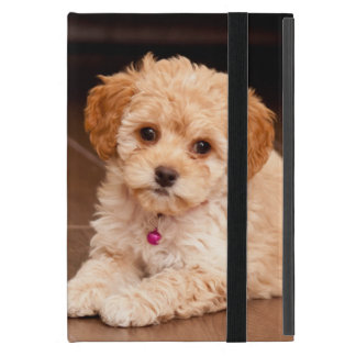 Baby Maltese poodle mix or maltipoo puppy dog iPad Mini Cover