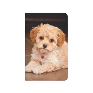 Baby Maltese poodle mix or maltipoo puppy dog Journal