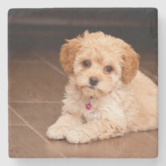 Baby Maltese poodle mix or maltipoo puppy dog Stone Coaster