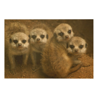 Baby meerkats wood wall art