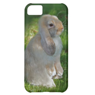 Baby Minilop Rabbit iPhone 5 Case