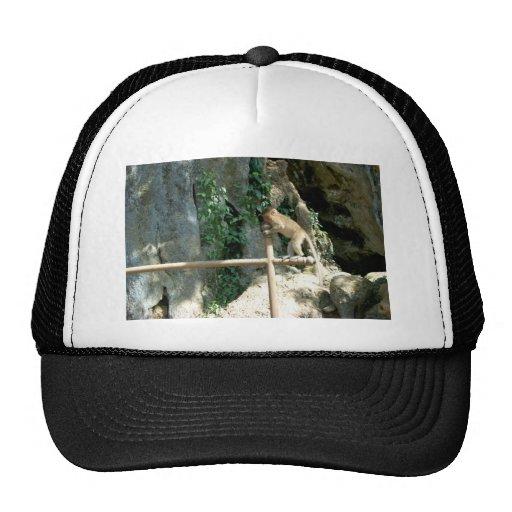 Baby Monkey Mesh Hats
