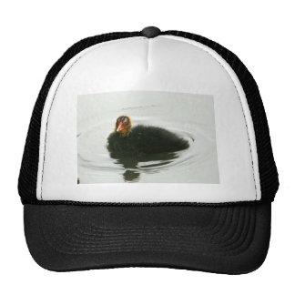 Baby Moorhens Trucker Hat