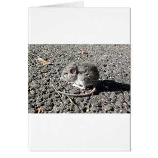 Baby Mouse Card