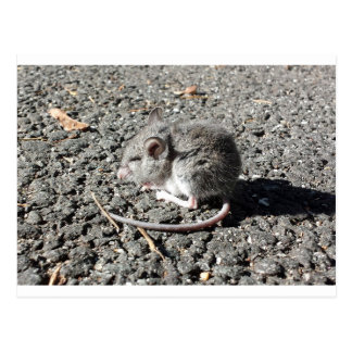 Baby Mouse Postcard