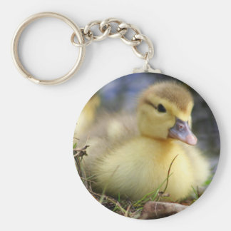Baby Muscovy duckling Basic Round Button Key Ring