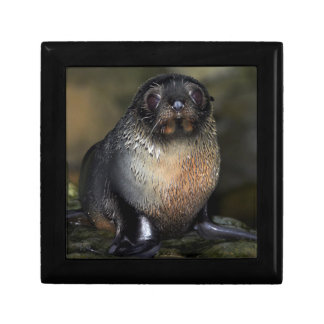 Baby New Zealand Fur Seal Small Square Gift Box