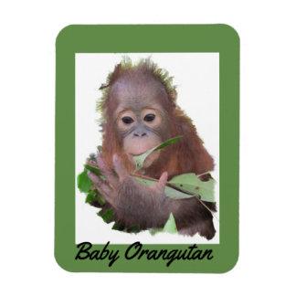 Baby Orangutan Orphan Rescue in Borneo Magnet